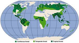 Temperate Rainforest World Map.Temperate Forests Climate Landforms Temperate Forests Glogster